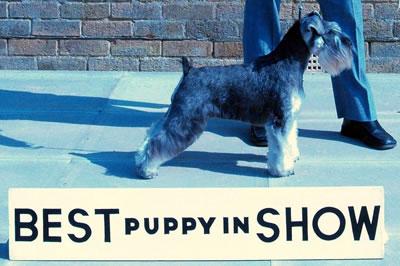 Best Puppy In Show 2