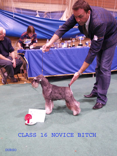 Novice Bitch