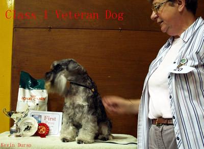 PA061773 VETERAN DOG