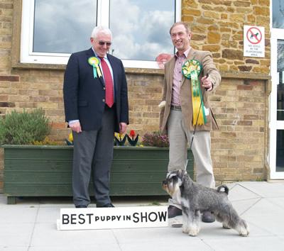 Best Puppy In Show