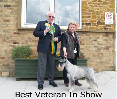 Best Veteran In Show