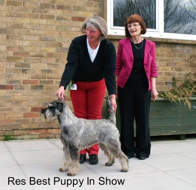 Reserve Best Puppy In Show