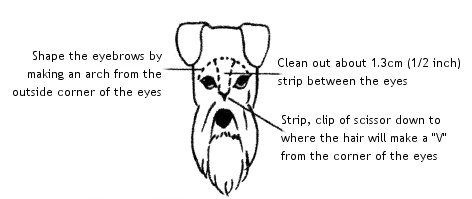 grooming1